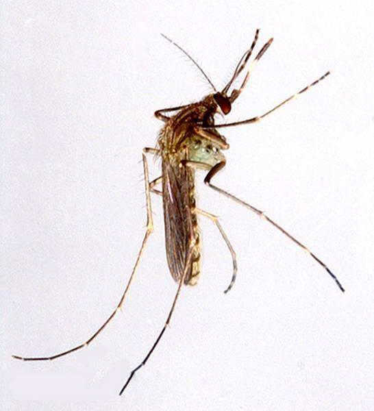 血吸虫病会传染吗?是怎么感染的?_百科名医