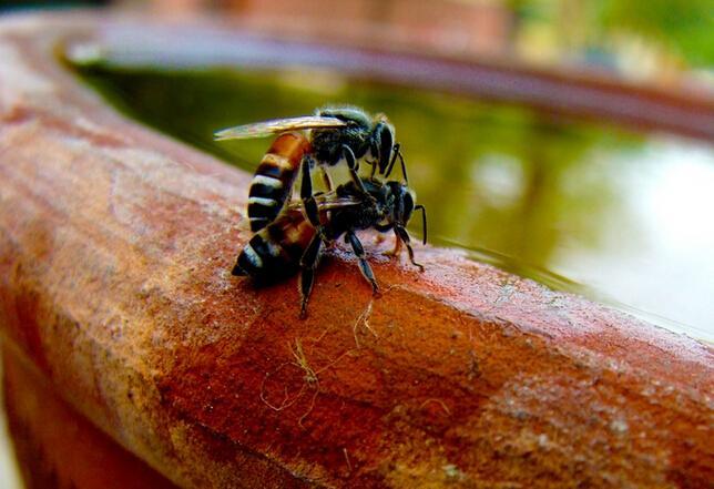 价格蜘蛛人蜜蜂图片