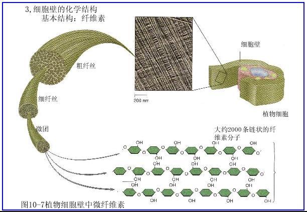 植物细胞壁