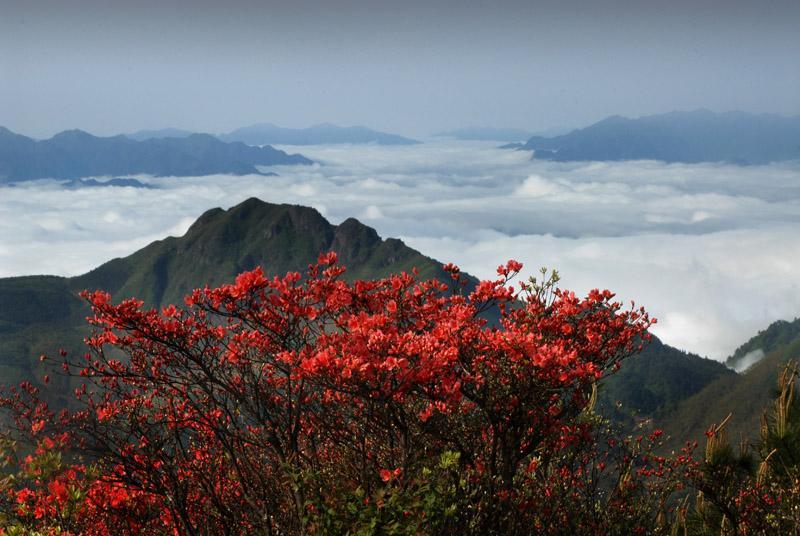 杜鹃山生态旅游区