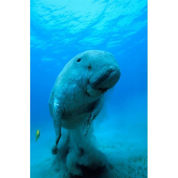 白鲸(海洋中的哺乳动物) - 搜狗百科