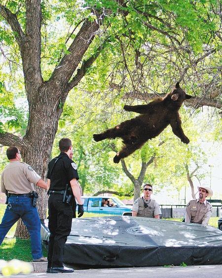 空中飞熊 搜狗百科图片