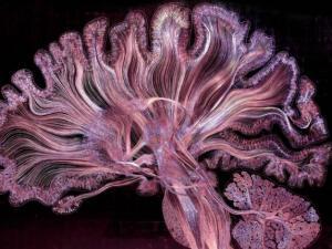 脑神经手绘图