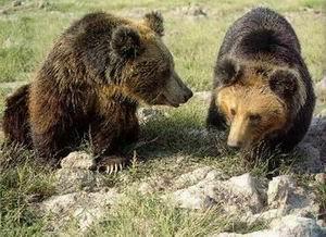 如何使熊远离
