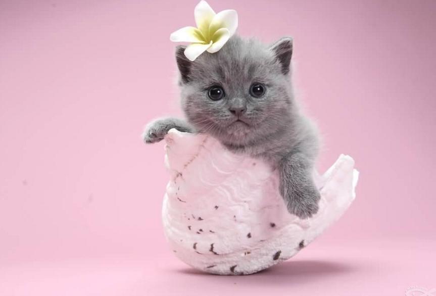 壁纸 动物 猫 猫咪 小猫 桌面 863_586