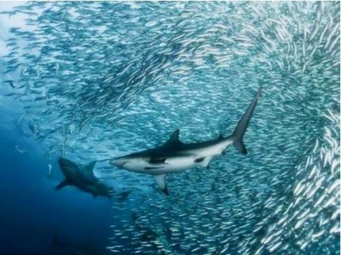 壁纸 动物 海洋动物 桌面 490_367