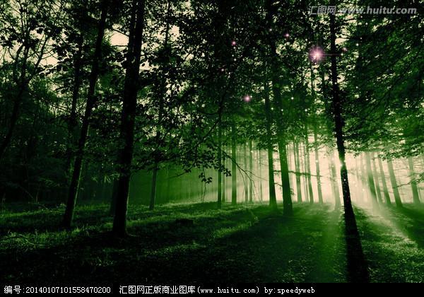 神秘森林图片