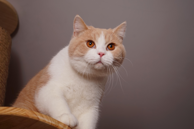 壁纸 动物 猫 猫咪 小猫 桌面 6000_4000