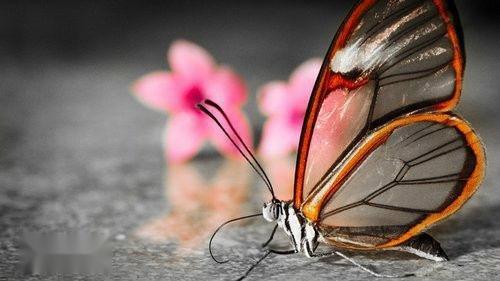 蝴蝶的身体结构图片