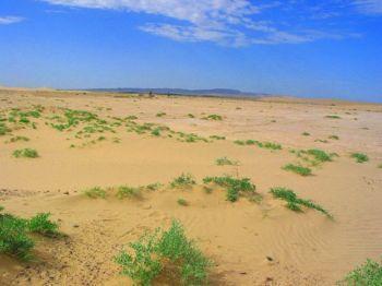 土地沙漠化 搜狗百科
