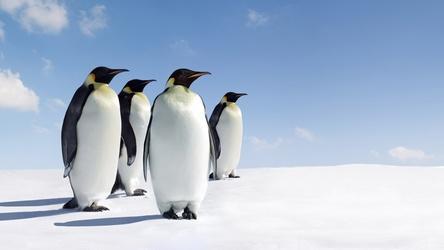 乐高10696企鹅拼装图纸