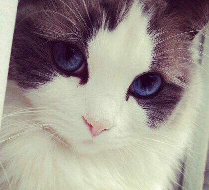 猫侧面图片手绘