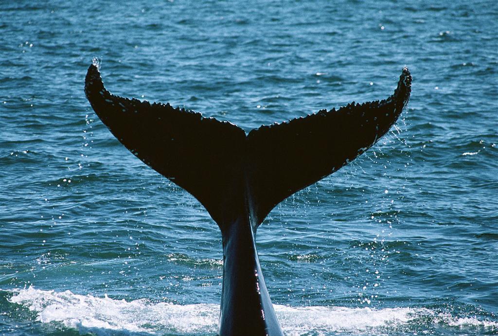 蓝鲸画法步骤教程唯美