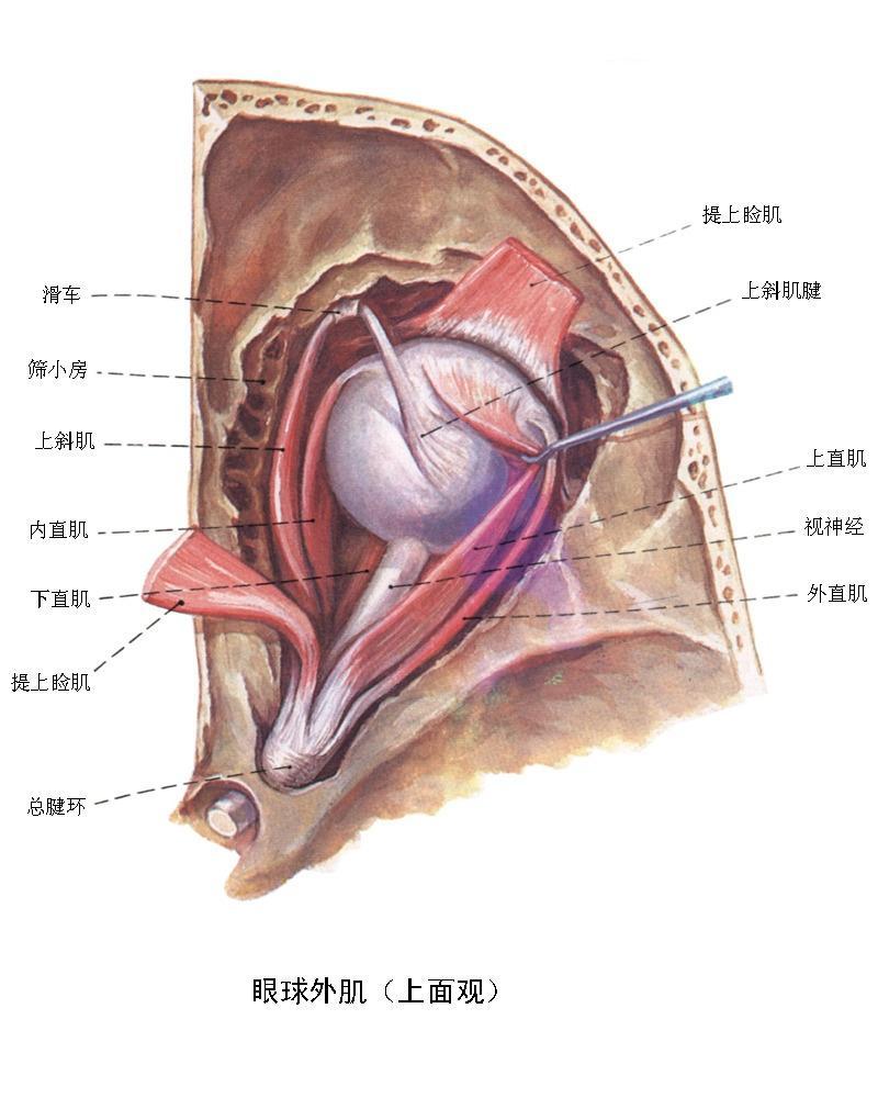 麦粒肿初期症状图片