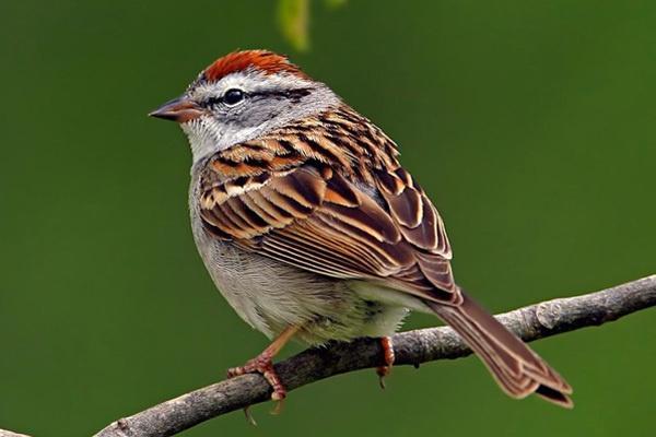 其中能够笼养供观赏的鸟类有100种左右.