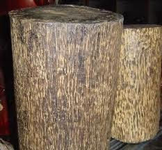 云南天然沉香树图片_沉香木(瑞香科植物白木香的干燥木质部分) - 搜狗百科