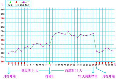 女性体温变化曲线图_排卵期体温图_排卵期体温变化图_淘宝助理