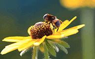 【蜜蜂团】夏季采蜜行动
