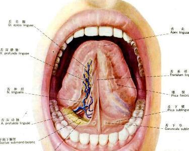口腔 底 癌
