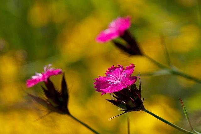 花萼圆柱形