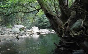 三江口原始森林